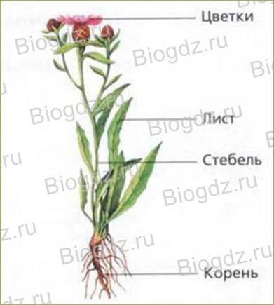 Параграф. 11. Растения - 1