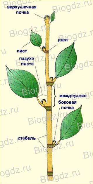 Параграф. 11. Растения - 2