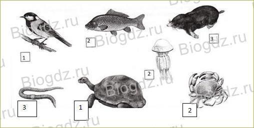 12. Животные - 1
