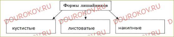 Лишайники - 2