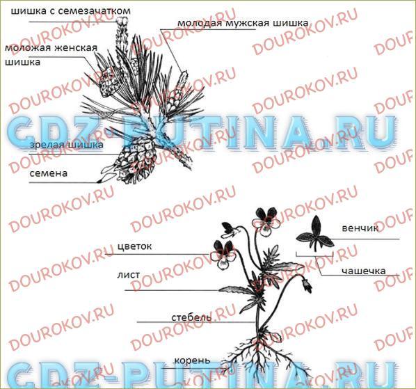 Покрытосеменные растения - 1