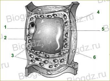 §7. Строение клетки - 1