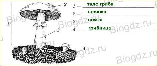§14. Шляпочные грибы - 1