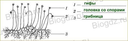 §15. Плесневые грибы и дрожжи - 1