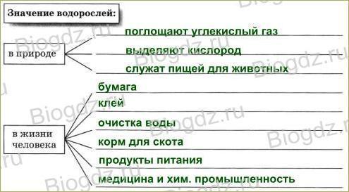 §18. Водоросли - 4