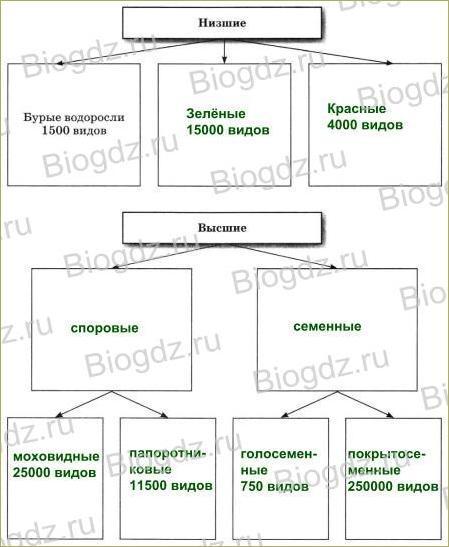 §24. Происхождение растений. Основные этапы развития растительного мира - 1