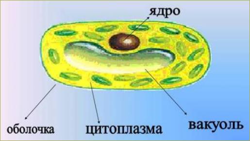5. Живые клетки - 1