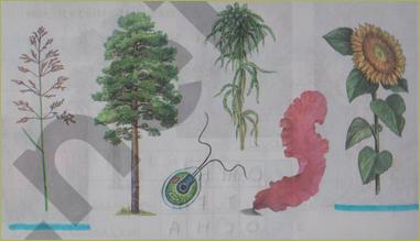 § 17. Покрытосеменные (цветковые) растения - 1