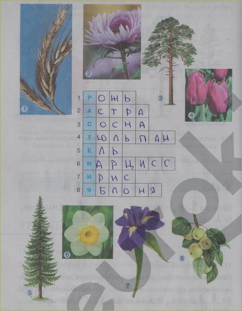 § 17. Покрытосеменные (цветковые) растения - 3