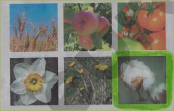 § 18. Значение растений в природе и жизни человека - 1