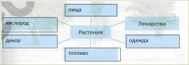 § 18. Значение растений в природе и жизни человека - 4