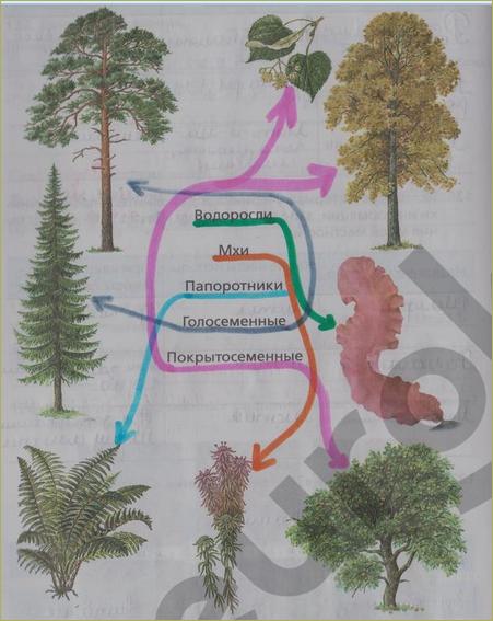 § 18. Значение растений в природе и жизни человека - 5