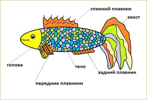 §21. Позвоночные животные - 2