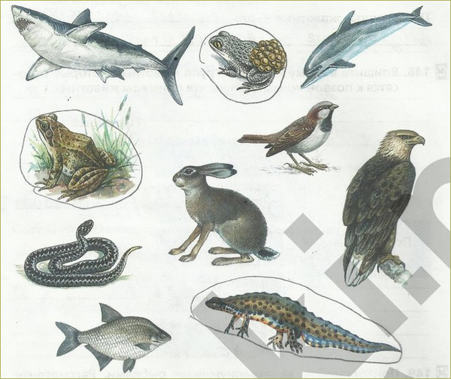 §21. Позвоночные животные - 3