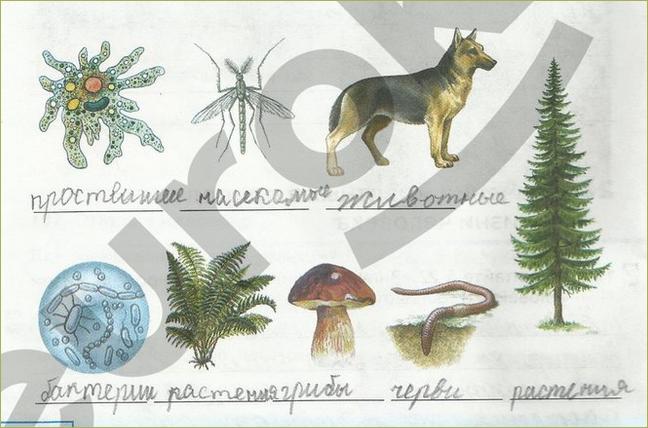 §22. Значение животных в природе и жизни человека - 2