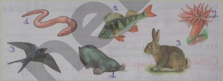 § 23. Три среды обитания - 2
