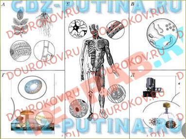 §6. Клеточное строение – общий признак живых организмов - 1