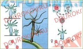 §16. Подведем итоги. Как живые организмы производят потомство? - 2