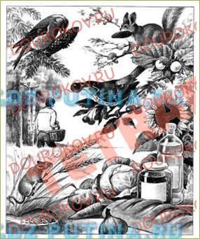 §26. Зачем живые организмы запасают питательные вещества? - 1