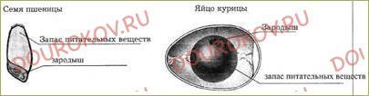 §26. Зачем живые организмы запасают питательные вещества? - 2