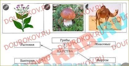 §30. Деление живых организмов на группы (классификация живых организмов) - 2