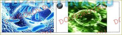 §30. Деление живых организмов на группы (классификация живых организмов) - 3