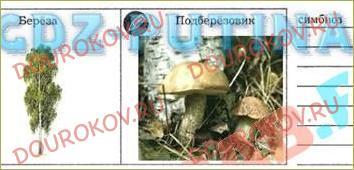 §48. Как живут организмы в природном обществе - 1