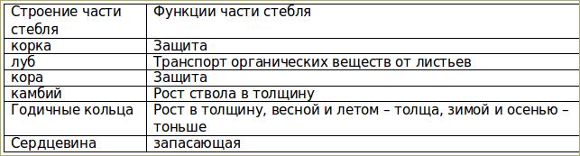§10. Стебель, его строение и значение - 2