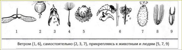 §12. Плод. Разнообразие и значение плодов - 2