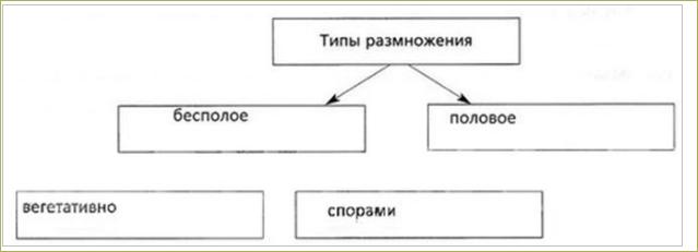 §16. Размножение и оплодотворение у растений - 1