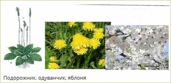 §30. Понятие о природном сообществе – биогеоценозе и экосистеме - 1