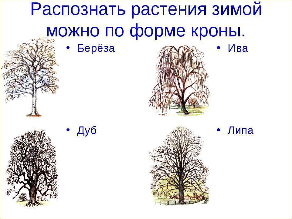 Осенне-зимние задания - 1