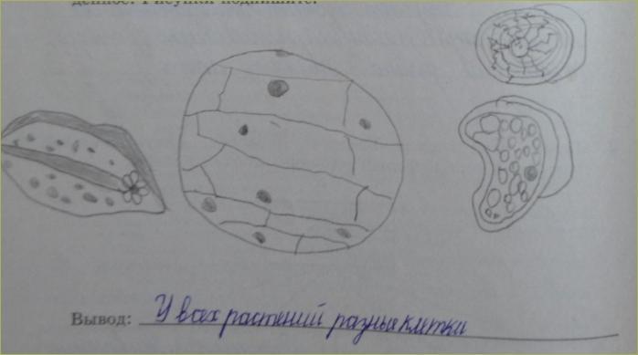 Клеточное строение организмов - 2