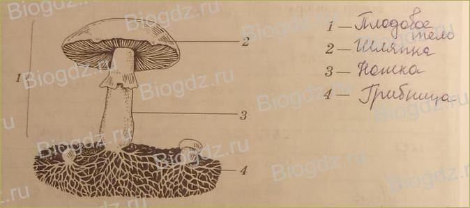 Царство Бактерии. Царство грибы - 4