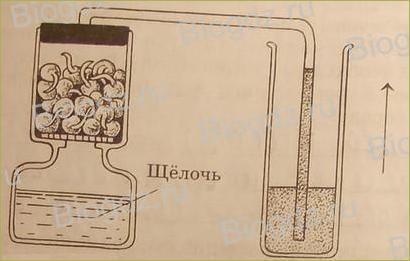 Жизнь растений - 10