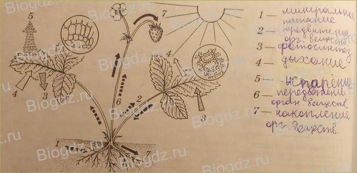 Жизнь растений - 15