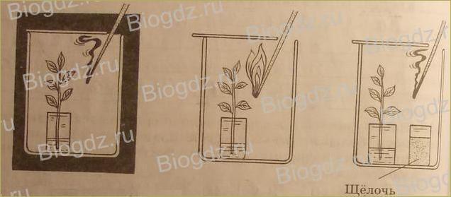 Жизнь растений - 4
