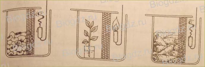 Жизнь растений - 5