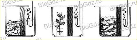 §17. Дыхание растений - 1