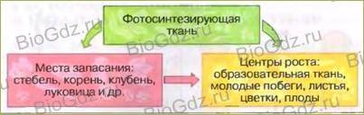 §19. Передвижение воды и питательных веществ в растении - 1