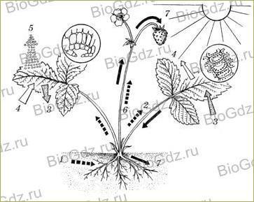 §20. Прорастание семян - 3
