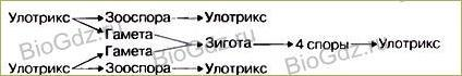 §22. Размножение споровых растений - 3