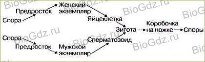 §22. Размножение споровых растений - 4
