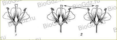 §24. Половое размножение покрытосеменных растений - 3