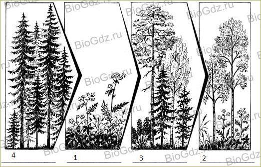 §31. Растительные сообщества - 3