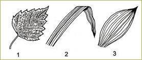 §6. Внешнее строение листа - 3