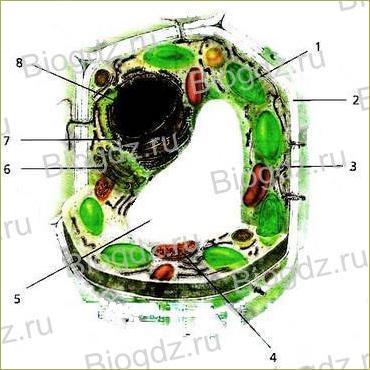 Тема 1. Клетка – живая система - 2