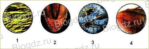 Тема 3. Ткани растений и животных - 1