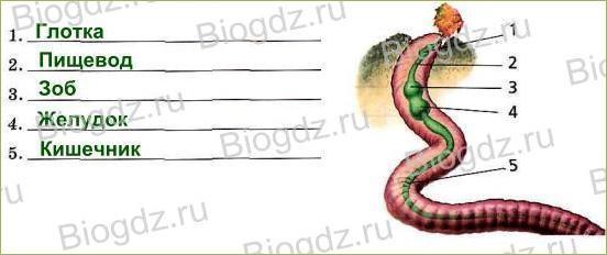 Тема 5. Органы и системы органов животных - 2