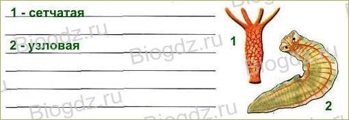 Тема 5. Органы и системы органов животных - 4